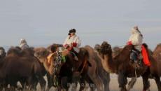 走,德令哈情人湖看骆驼大赛走