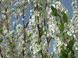 阳春三月走进青海春天循化