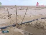 """国土绿化提速三年行动进行时 格尔木在沙漠荒滩里打造""""千亩花海""""美景"""
