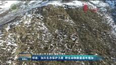 祁连:加大生态保护力度 野生动物数量逐年增加