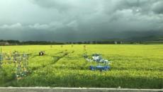 2019青海·門源油菜花文化旅游節暨首屆中國祁連山風箏節將于7月9日開幕