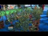 河湟農展會:新技術點亮高原現代農業發展