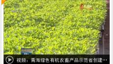 青海绿色有机农畜产品示范省创建工作持续推进