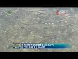 青海湖裸鯉資源蘊藏量達9.3萬噸  比2002年增長了35.87倍