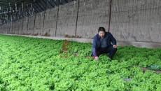 【新春走基層·脫貧攻堅一線見聞】種植大村的蔬菜銷售路