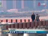 【大美短视频】草长莺飞三月天 水鸟嬉戏绕湖面
