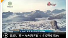 西寧市大通縣首次驚現野生雪豹