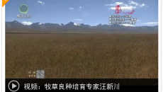 【2019青海高原工匠】牧草良種培育專家汪新川