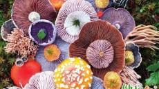 注意食品安全春季慎食野菜和野生蘑菇