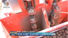 青海省马铃薯产业科技创新平台种薯基地开始播种
