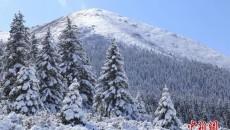 今日小雪   天冷勿忘加衣 愿你今冬一切安好