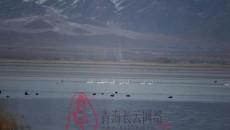 都蘭湖國家濕地公園成為萬鳥棲息地