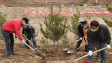 互助县2021年春季义务植树大会战拉开序幕