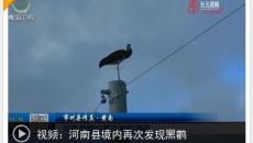 河南县境内再次发现黑鹳