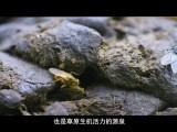 青海·我们的国家公园 第3集 峡谷(上)