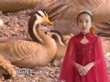 【红色经典我来读】《祖国啊,我亲爱的祖国》-牛梦涵