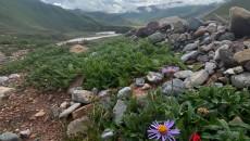 【《玉树花开》走基层】江源绿色是心中的花