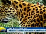 玉树囊谦:红外相机拍摄到国家一级保护动物金钱豹