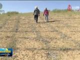 乌兰:用行动构筑绿色生态屏障