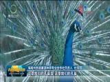 【关注第四个中国农民丰收节】贵德:打造绿色有机农畜产品输出地 助推乡村振兴