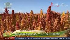 青海乌兰西庄村 多彩藜麦即将成熟 产业升级百姓致富