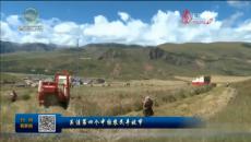 关注第四个中国农民丰收节 玉树囊谦:秋收工作全面展开