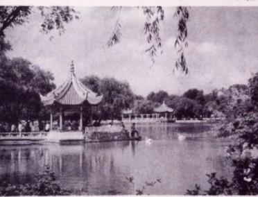 还记得记忆中的西郊公园吗?