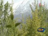 大柴旦改革开放四十年:守护绿水青山 建设美丽家园