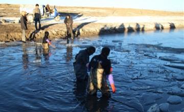 300只羊坠入冰河百人施救