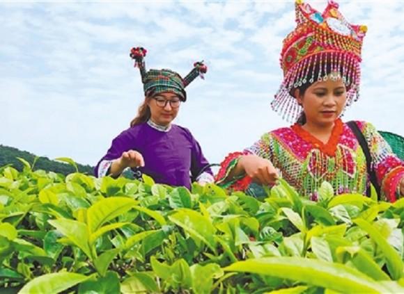 广南:抓产业 稳就业