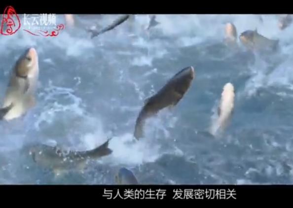 【长云视频】大美青海
