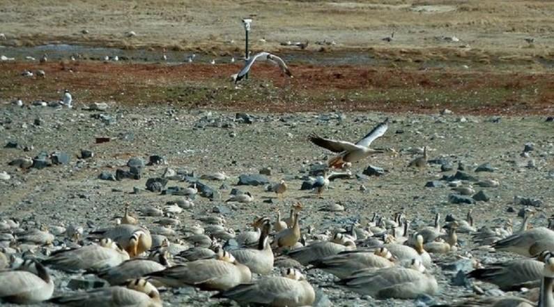 青海湖鸟岛慢直播,选哪个角度你说了算