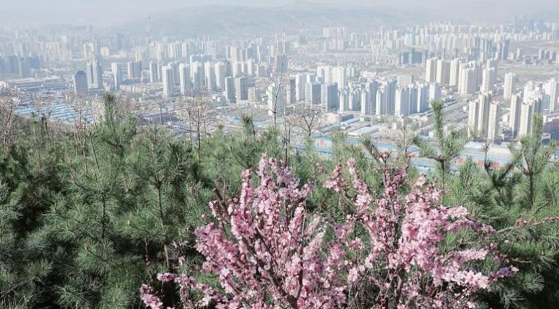 西宁南北山绿化显成效