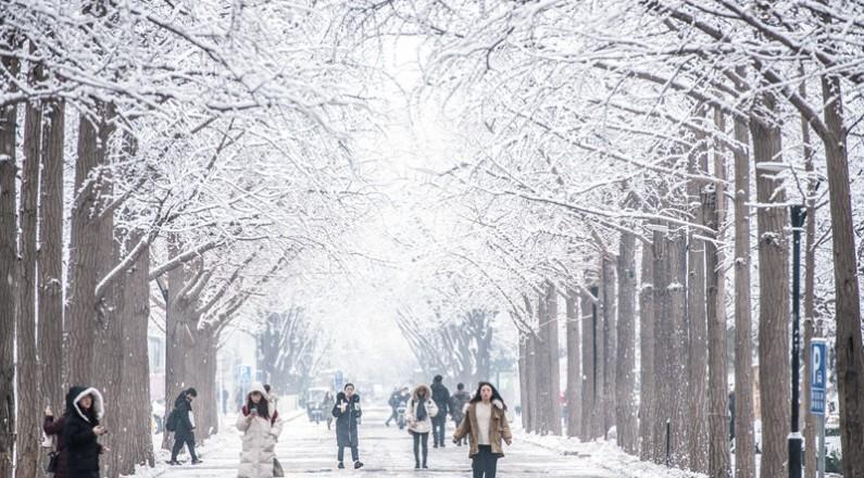 大學校園迎來2020年第一場雪 哪抹景色最讓你心動?