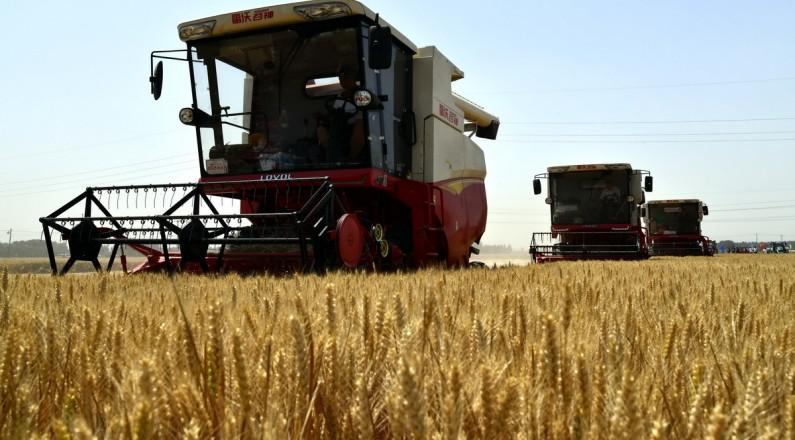 我国第二大小麦主产区山东开镰收麦