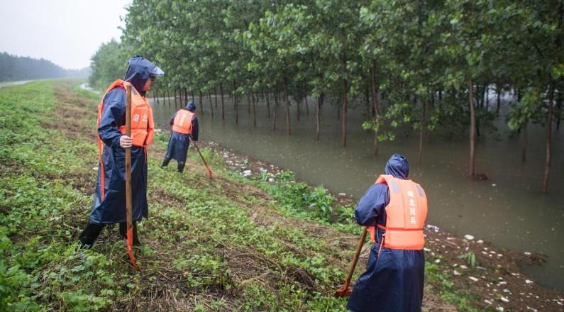 上漲的江水淹沒武漢天興洲江邊的部分植被