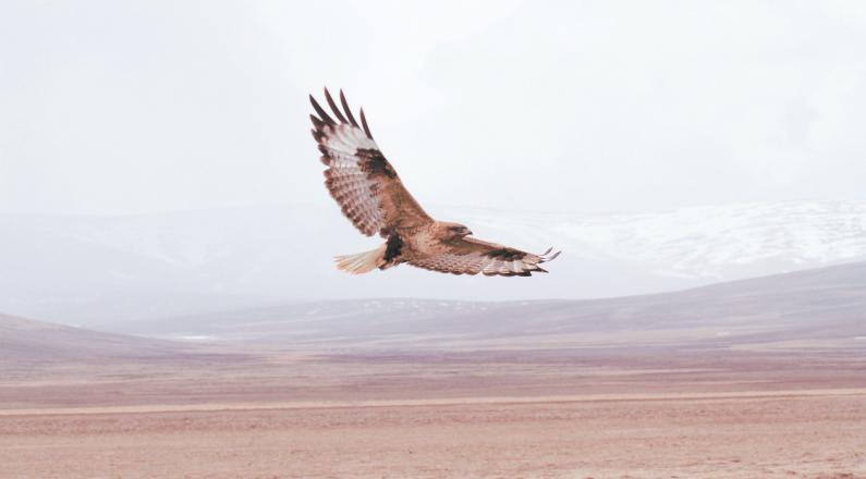 三江源,我们的国家公园 鹰的王国