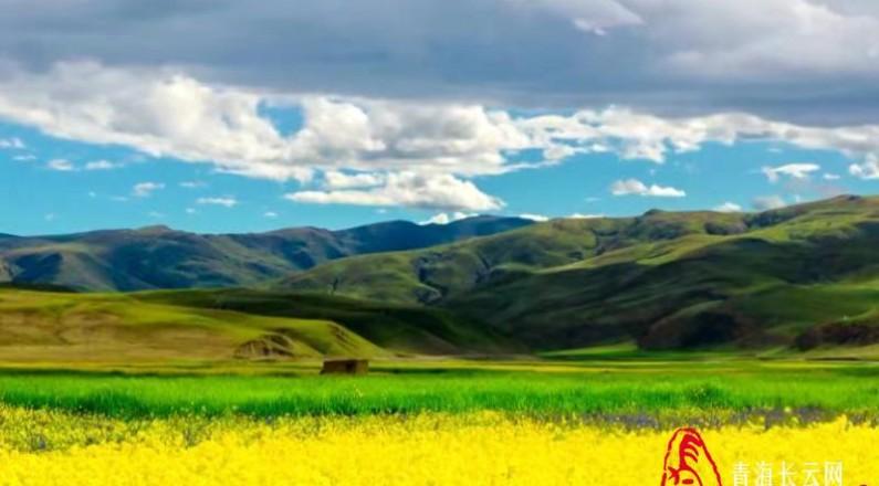 """【长云特稿】打造绿色有机农畜产品输出地  这里""""'牛'转新机"""""""