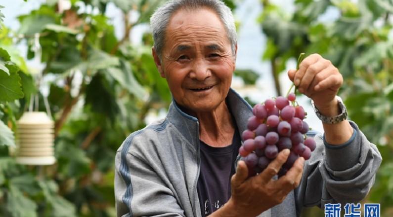 【多彩青海·金】青海平安:果蔬示范园促增收